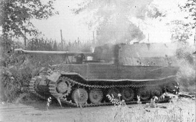 Elefant-33