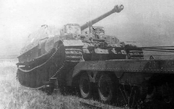 Elefant-53
