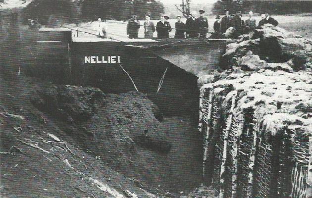 Nellie-16